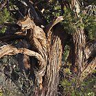 Mystic Hills Walking Path  •  Sedona, Arizona by Richard  Leon