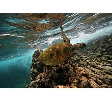 Turtle Time Photographic Print