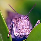 Grasshopper in the Bushes by Debbie Sickler
