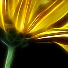 Neon Yellow Petals I by Lesley Smitheringale