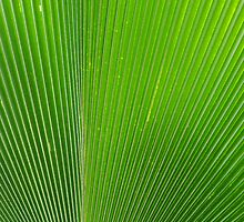 Close up of a palm leaf by Of Land & Ocean - Samantha Goode