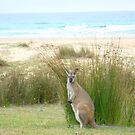Australian wildlife by Samantha  Goode