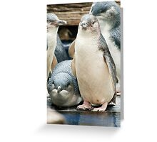 Fairy Penguins Greeting Card