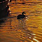 Ducks gold by brilightning