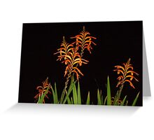 Fiery Blooms Greeting Card