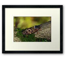 Semi Cicada Framed Print