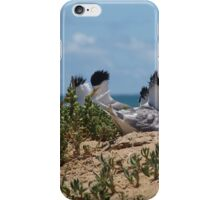Crested Terns Penguin Island (3) iPhone Case/Skin