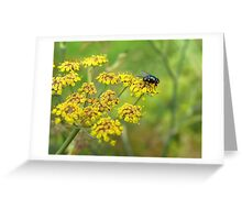 """Blue bottle""on fennel Greeting Card"