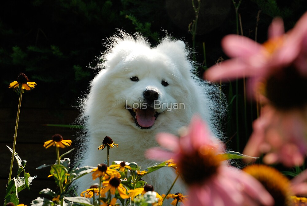 Smiling  by Lois  Bryan