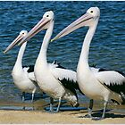 Three Wise Pelicans by GrowingWild