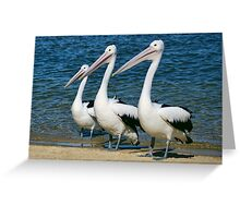 Three Wise Pelicans Greeting Card