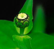 The Newness Of A Bud by Deborah  Benoit