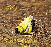 Birds Love Water! 2009 Calendar by Dreambarks