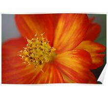 Macro Flower 7 Poster