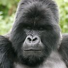 Gorilla by Steve Bulford