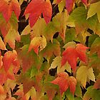The glorious colours of autumn by Heather Thorsen
