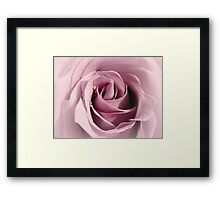 Faded Lilac Rose Framed Print