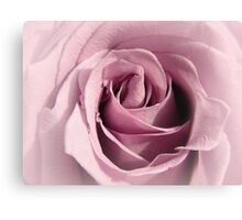 Faded Lilac Rose Canvas Print