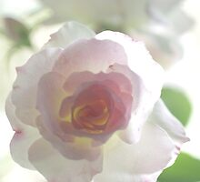 Softly Gently Roses Two by Clare Colins