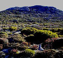 photoj Tasmania Mt Ben Lomond, 'Comming Into Spring' by photoj