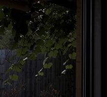 Vines Outside by Thom Kotis