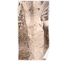 Scribbly Gum - Drawing Poster