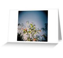 Lantern bush Greeting Card