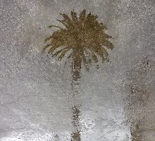 Rainy Day Palm by RichCaspian