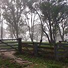 Misty morning by Liz Worth