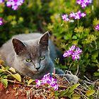 relaxing kitten in flower bed by Hannele Luhtasela-el Showk