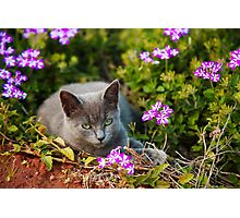 relaxing kitten in flower bed Photographic Print