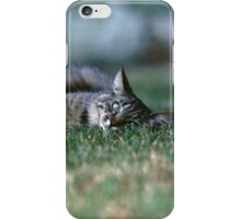 """Chat - Cat """" Tchink boom"""" 03 (c)(t) ) by Olao-Olavia / Okaio Créations 300mm f.2.8 canon eos 5 1989  iPhone Case/Skin"""