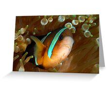 Aggresive Anemone Fish Greeting Card