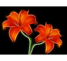 Two Lilies Photographic Print
