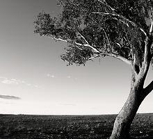 Terra Firma by Kelsi Doscher