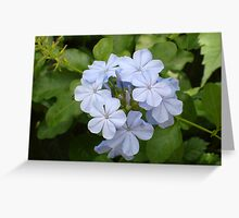 Floridian Flower - Blue Greeting Card