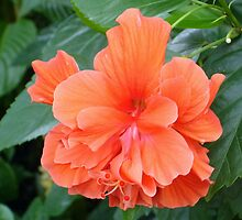 Floridian Flower - Orange by CBenson