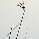 Dragonfly on White II by Troy Spencer