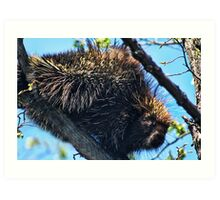 KEEP YOUR DISTANCE..I'M ARMED WITH QUILLS..PORCUPINE PICTURE AND OR CARD Art Print