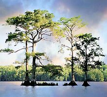 Louisiana Cypress Trees by Marcella Babineaux