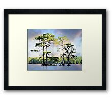 Louisiana Cypress Trees Framed Print