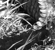 Gator Tail by Michael Damanski
