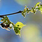 Work to bee. by Gideon du Preez Swart