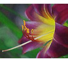 Flower As Art Photographic Print