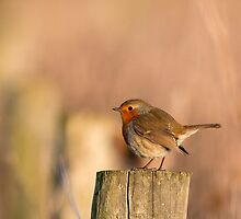 Robin on a post by Ashley Beolens