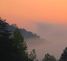 foggy sunrise by dc witmer