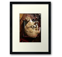 silly trapper cat wants to wrestle Framed Print