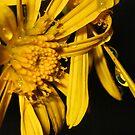 Daisy by ~ Butterfly ~
