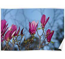 """""""Magnolias"""" Poster"""