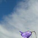 scots harebell by dinghysailor1